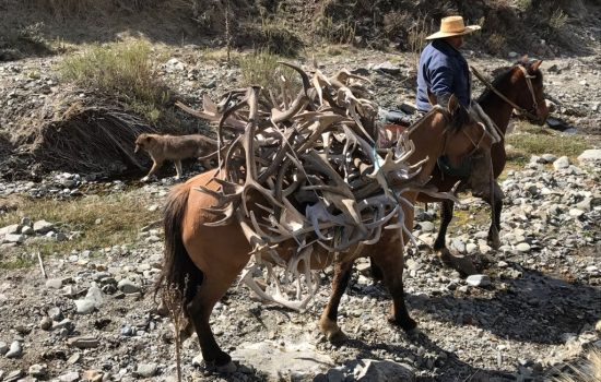 Collecting a few sheds at Tupungato